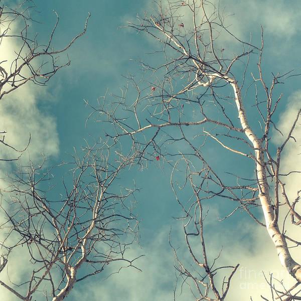 Leafless Tree Wall Art - Photograph - Tree Tops 4 by Priska Wettstein