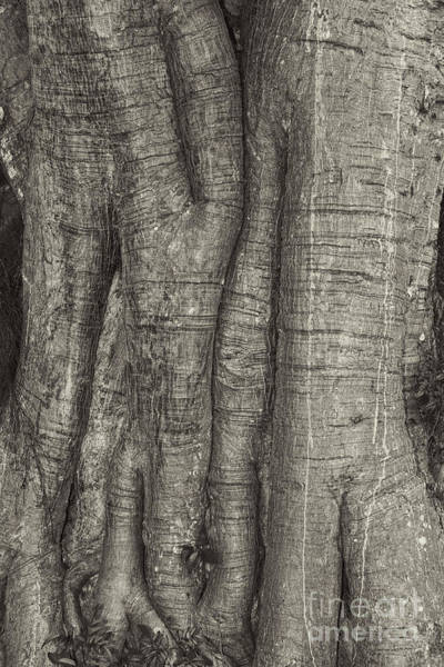 Photograph - Tree Trunk by Les Palenik