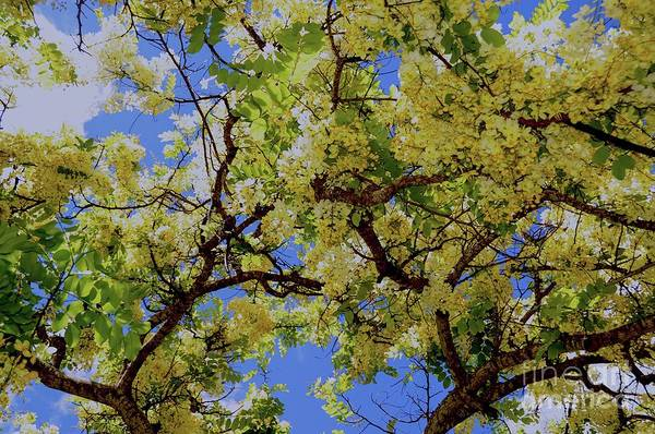 Trees And Flowers In Hawaii Art Print by D Davila