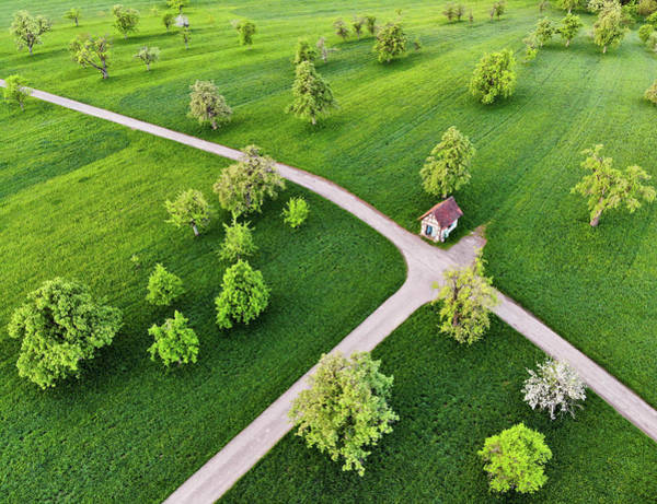 Photograph - Trees On Green Spring Meadow Aerial View by Matthias Hauser