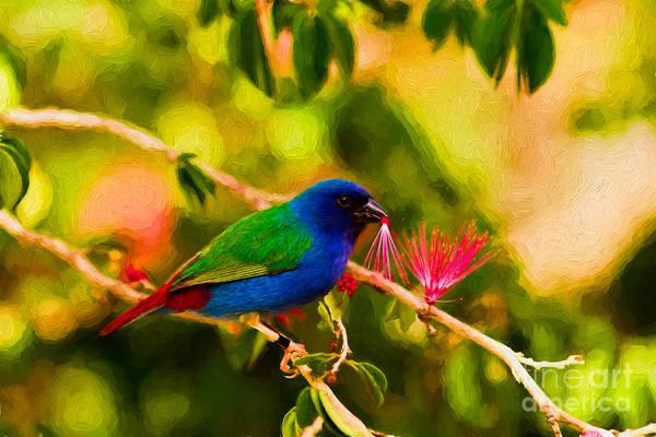 Photograph - Tricolor Parrot Finch by Les Palenik