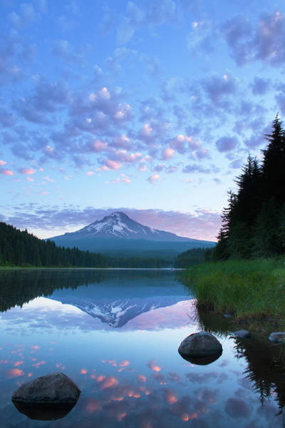 Mt Hood Photograph - Trillium Sunrise by Patrick Campbell