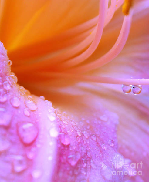 Pink Lily Photograph - Tropical Thirst by Krissy Katsimbras