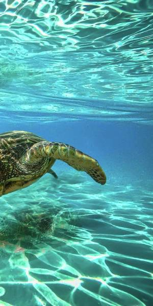 Turtle Photograph - Turtle Tryptic by James Roemmling