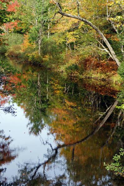 Photograph - Twice The River by Lynda Lehmann