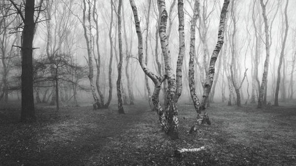 Nottinghamshire Photograph - Twisted by Chris Dale