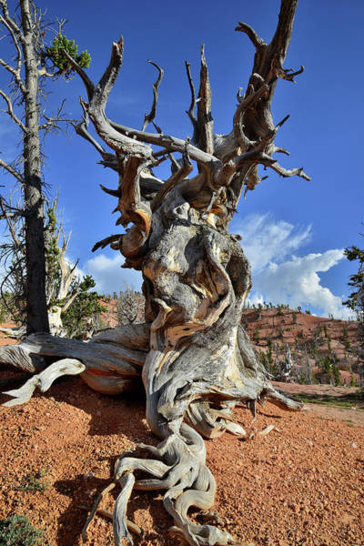 Photograph - Twisted by Ray Mathis