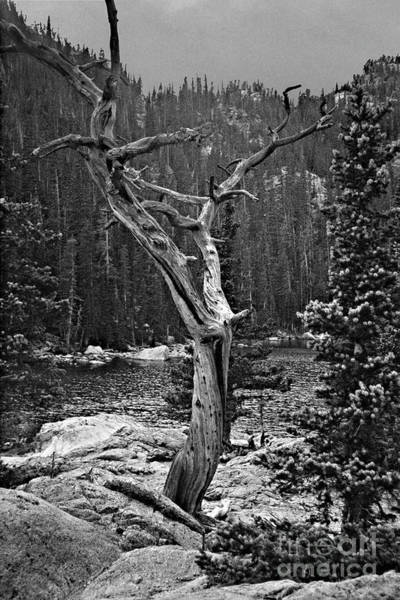 Photograph - Twisted Tree by Pete Hellmann
