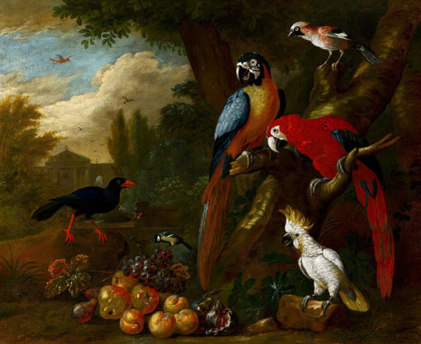 Painting - Two Macaws, A Cockatoo And A Jay, With Fruit by Jacob Bogdani