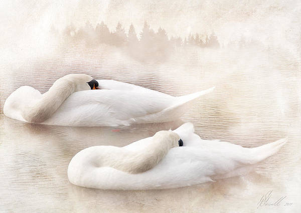 White Swan Photograph - Two Swans by Svetlana Sewell