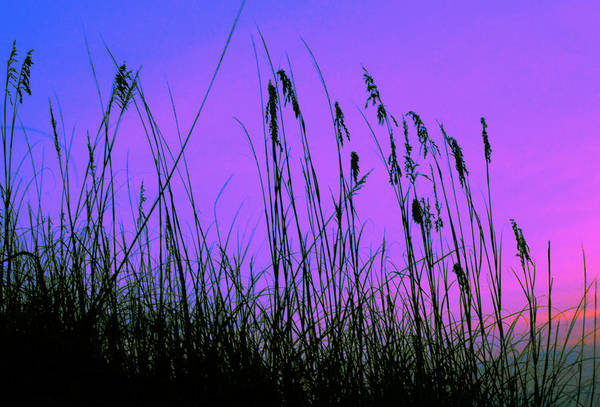 Photograph - Tybee Island Grasses by Elyza Rodriguez