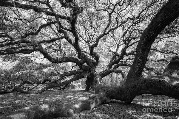 Wall Art - Photograph - Under The Angel Oak Tree by Michael Ver Sprill