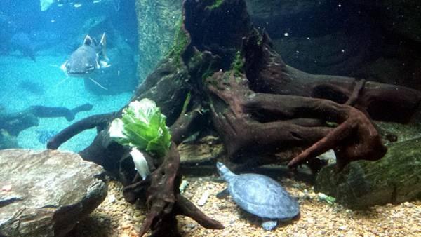 Photograph - Underwater Vista by Kenny Glover