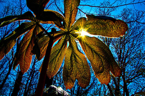 Photograph - Up by Phil Koch