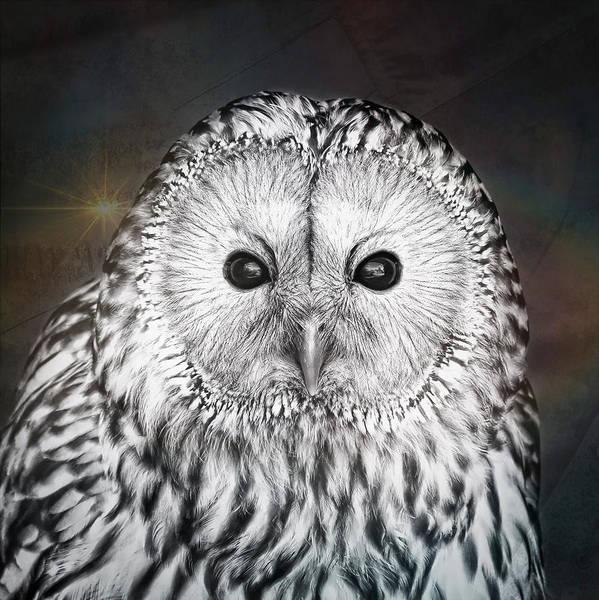 Wall Art - Photograph - Ural Owl by Tom Gowanlock