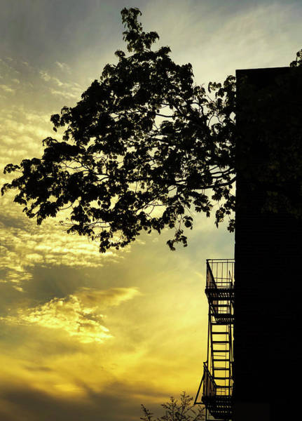 Photograph - Urban Sunrise by Cate Franklyn