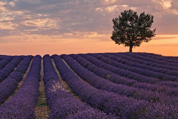 Feld Wall Art - Photograph - Valensole - Provence, France by Joana Kruse