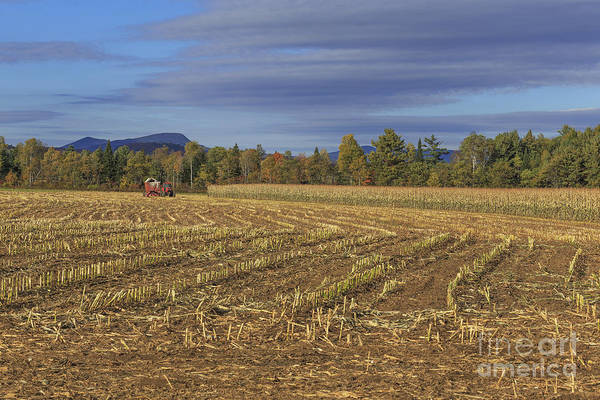 Corn Field Photograph - Vermont Cornfield  by Edward Fielding