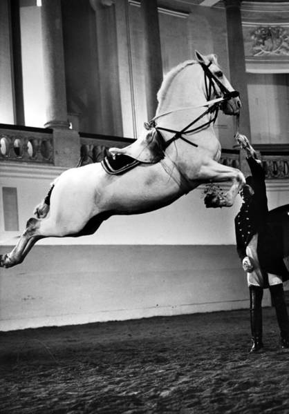 Wall Art - Photograph - Riding School, Vienna by Granger