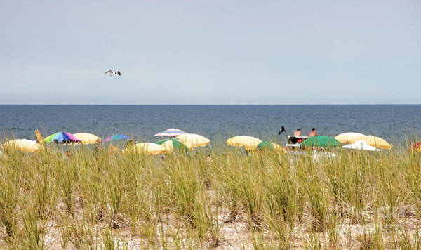 Digital Art - View Over The Barrier Dune At Bethany Beach In Delaware by William Kuta