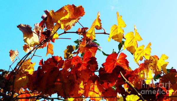 Photograph - Vineyard 12 by Xueling Zou