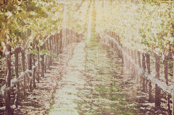 Photograph - Vineyard In Autumn With Vintage Film Style Filter by Brandon Bourdages