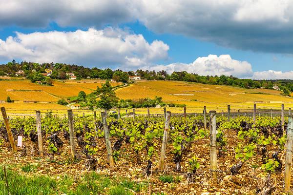 Wall Art - Photograph - Vineyards Of Burgundy by W Chris Fooshee