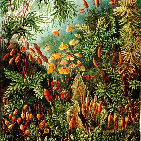 Muscinae Digital Art - Vintage Botanical by Bonnie Bruno