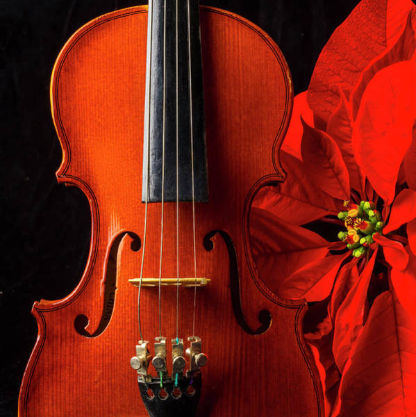 Bluegrass Photograph - Violin And Poinsettia by Garry Gay