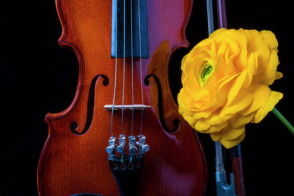 Bluegrass Photograph - Violin And Ranunculus by Garry Gay