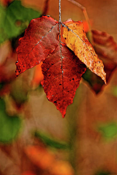 Photograph - Waiting For Fall by Roberto Aloi