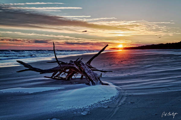 Hilton Head Island Photograph - Washed Ashore by Phill Doherty