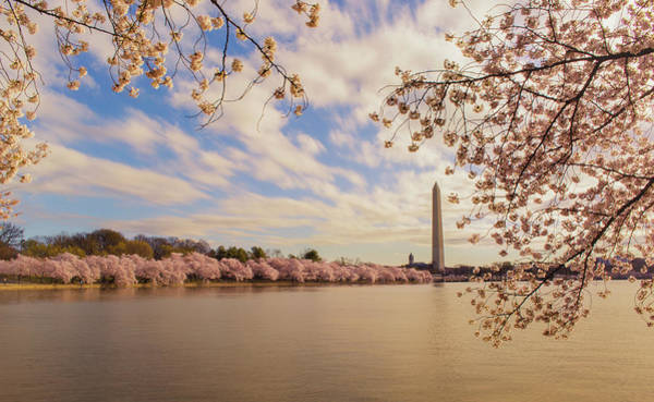 Photograph - Washington Monument And Cherry Blossom by Rima Biswas