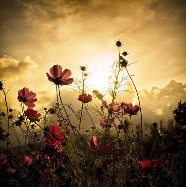 Red Flower Photograph - Watching The Sun by Christian Marcel