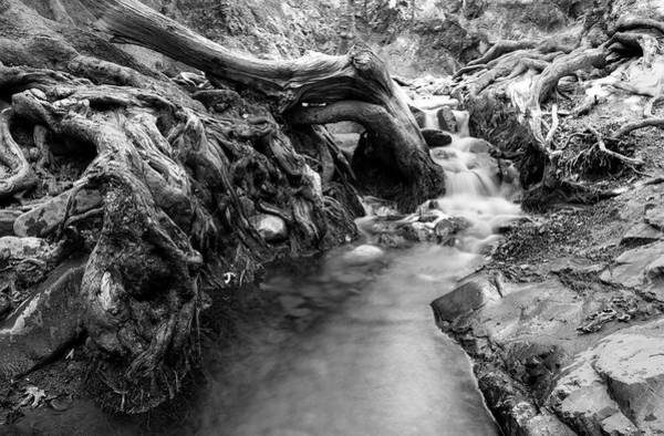 Scenery Wall Art - Photograph - Water Flowing Through Tree Roots by Michalakis Ppalis