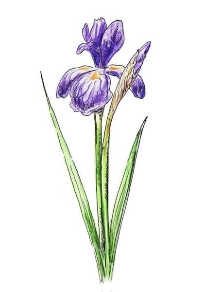 Painting - Watercolor Iris Flower by Irina Sztukowski