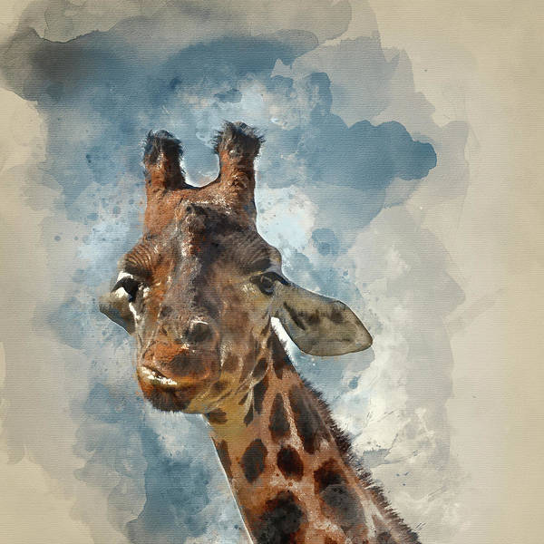 Colorful Giraffe Photograph - Watercolor Painting Of Portrait Of African Giraffe Giraffa Again by Matthew Gibson