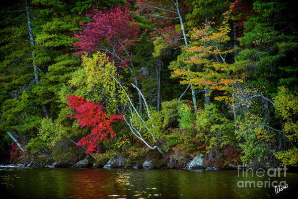 Photograph - Waters Edge by Alana Ranney