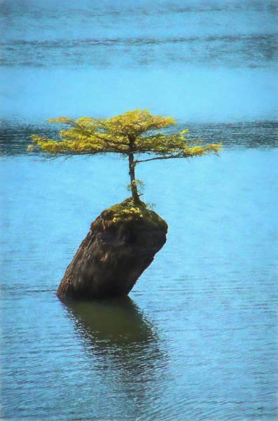 Photograph - Fairy Lake Tree by Marilyn Wilson