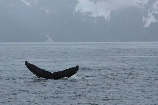 Photograph - Whale Fluke by Brandy Little