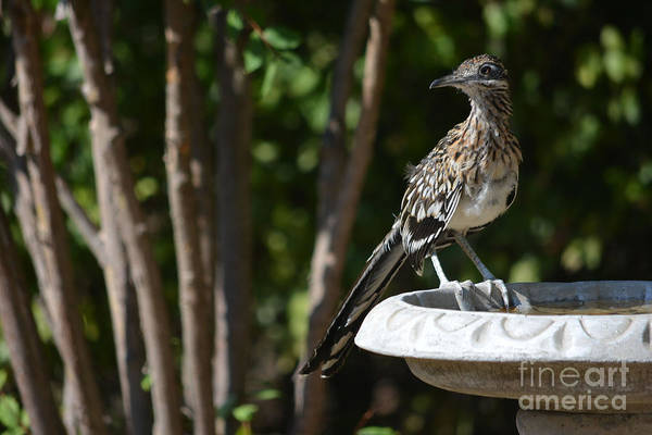 Wall Art - Photograph - Roadrunner What Are You Looking At by Ruth  Housley