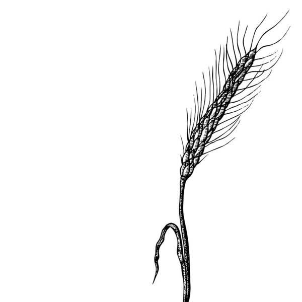 Organic Drawing - Wheat by Karl Addison