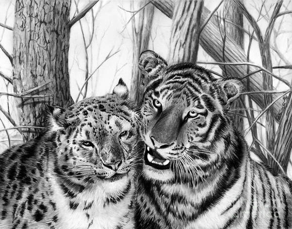 Bengal Tiger Drawing - When Two Hearts Collide by Peter Piatt