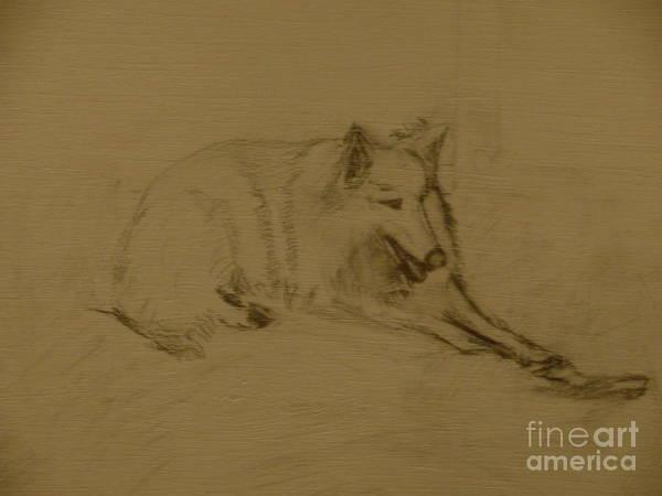 German Shepherd Drawing - White Alsatian by Sophia Landau