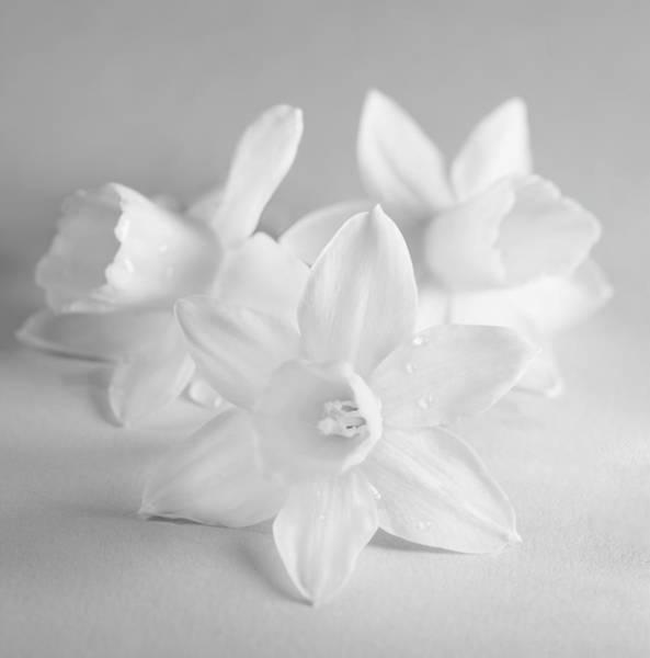 Wall Art - Photograph - White Mini Narcissus 3 by Iris Richardson
