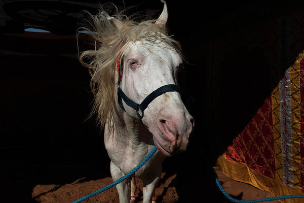 Photograph - White Horse by Mahesh Balasubramanian