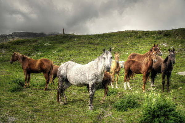 Photograph - White Horse by Roberto Pagani