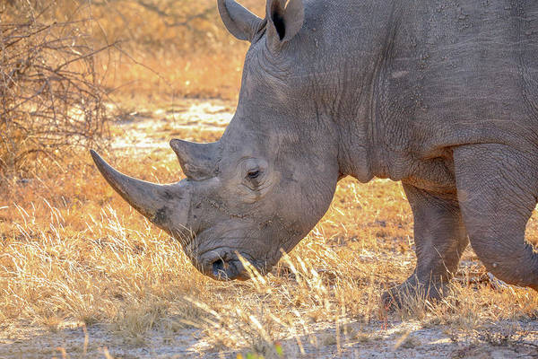 Wall Art - Photograph - White Rhinoceros by Paul Fell