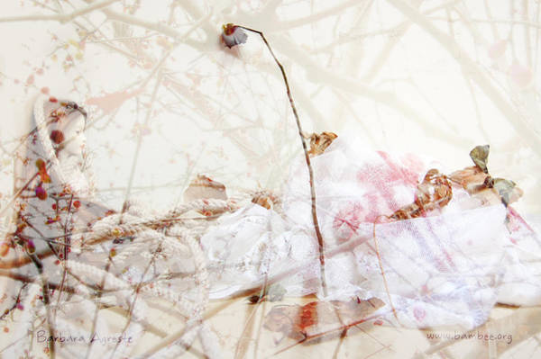 Fairy Pools Digital Art - White Rose by Barbara Agreste