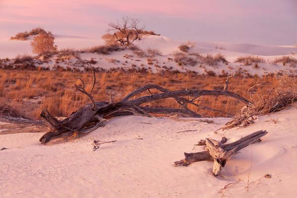 Photograph - White Sands Remnants by Liza Eckardt